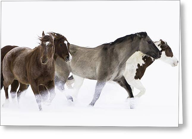 Quarter Horses Photographs Greeting Cards - Snowy March II Greeting Card by Carol Walker