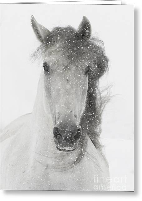Andalusian Greeting Cards - Snowy Mare Greeting Card by Carol Walker