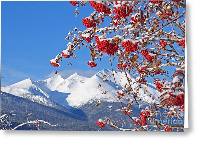 Berry Greeting Cards - Snowy Mountain Ash Greeting Card by Stanza Widen