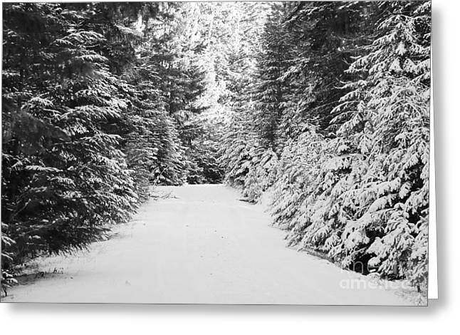 Snowy Mountain Road - Black And White Greeting Card by Carol Groenen