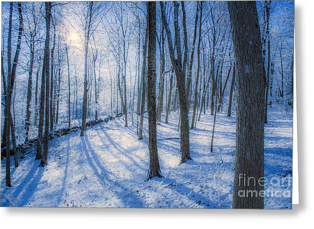 Snow Storm Greeting Cards - Snowy New England Forest Greeting Card by Diane Diederich