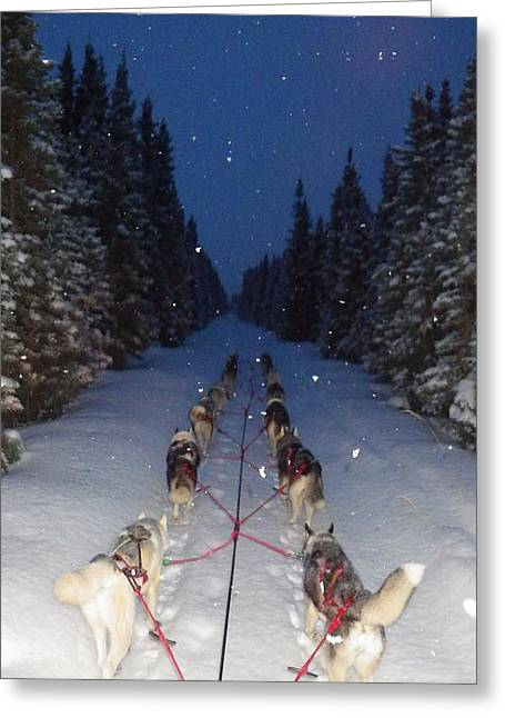 Sled Dogs Greeting Cards - Snowy Night in the Pines Greeting Card by Karen  Ramstead