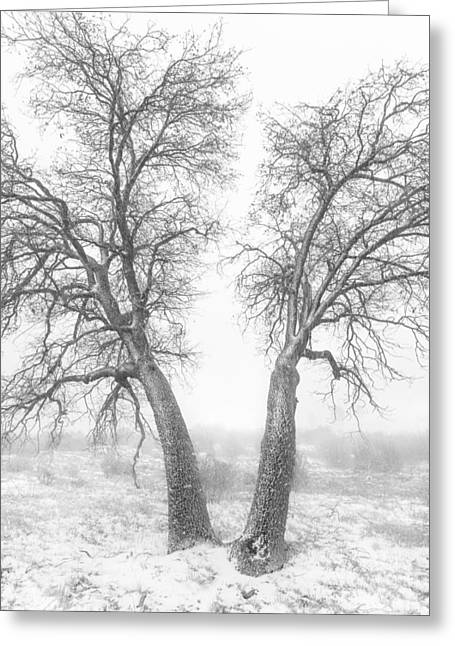 Back Country Greeting Cards - Snowy Oaks Greeting Card by Alexander Kunz