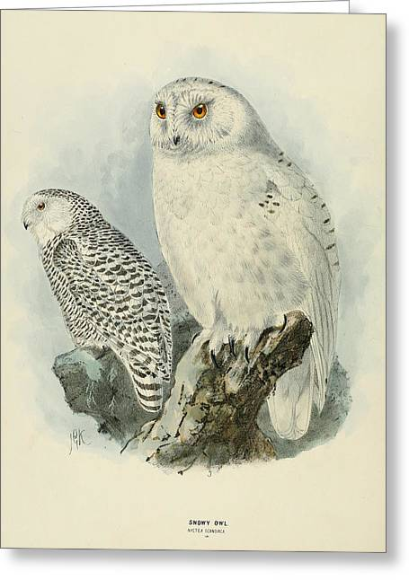Owl Greeting Cards - Snowy Owl 2 Greeting Card by J G Keulemans