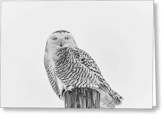 Glowing Eyes Greeting Cards - Snowy Owl 2014 1 Black and White Greeting Card by Thomas Young