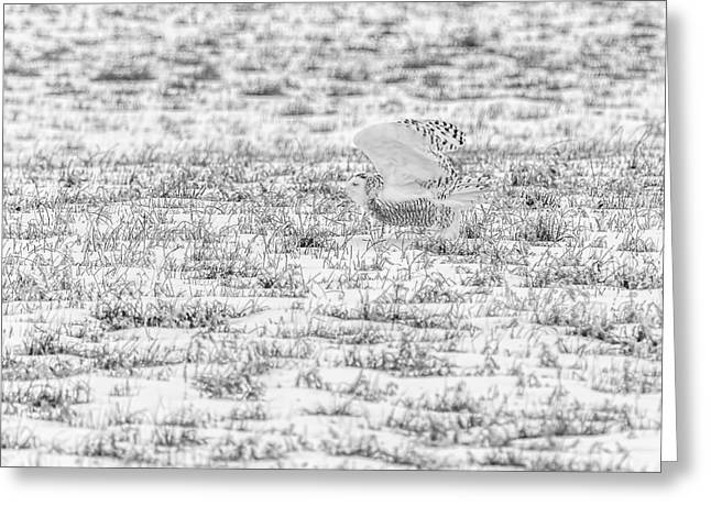 Glowing Eyes Greeting Cards - Snowy Owl 2014 3 Black and White Greeting Card by Thomas Young