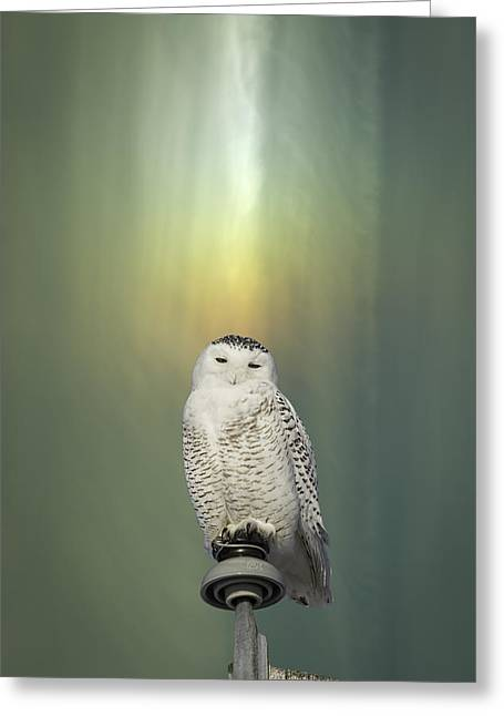 Snowy White Owl Greeting Cards - Snowy Owl And Aurora Borealis Greeting Card by Thomas Young