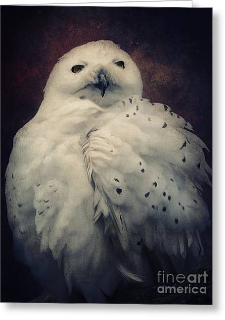 Europe Mixed Media Greeting Cards - Snowy Owl Greeting Card by Angela Doelling AD DESIGN Photo and PhotoArt