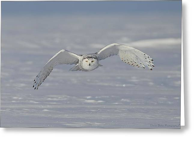 Snowy Owl Head On Greeting Card by Daniel Behm