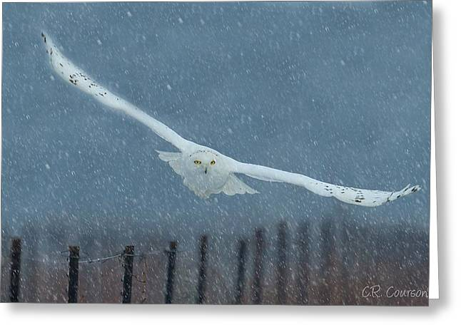 Courson Greeting Cards - Snowy Owl In a Snowstorm Greeting Card by CR  Courson