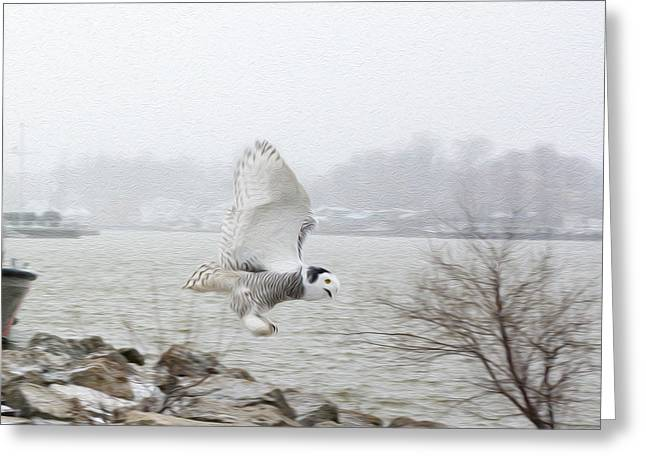 Charlotte Fine Art Greeting Cards - Snowy Owl in Flight 2 Greeting Card by Tracy Winter