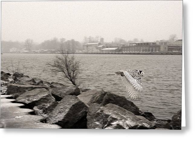 Charlotte Fine Art Greeting Cards - Snowy Owl in Motion Greeting Card by Tracy Winter