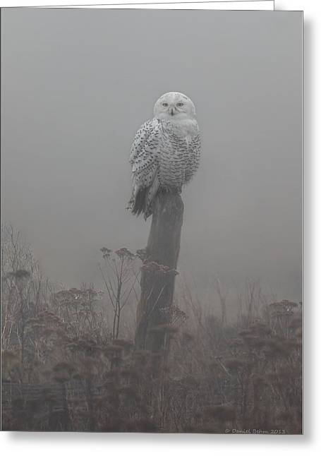 Misty. Pyrography Greeting Cards - Snowy Owl  in the Mist Greeting Card by Daniel Behm