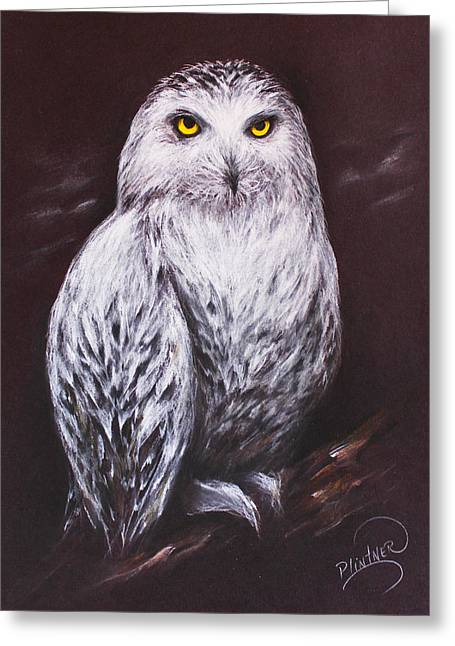 Snowy Owl In The Night Greeting Card by Patricia Lintner