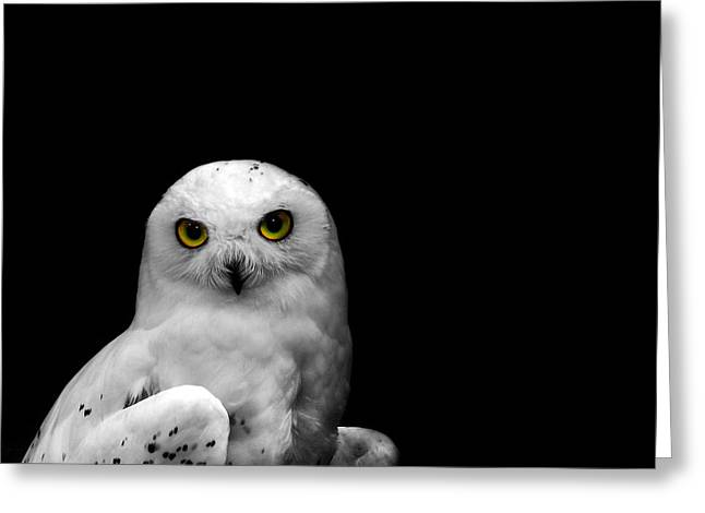 Snowy Owl Greeting Card by Mark Rogan