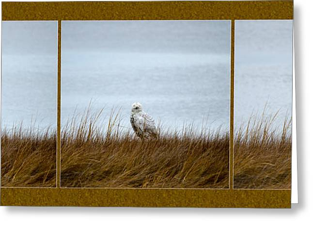 Wildlife Refuge. Greeting Cards - Snowy Owl Triptych Greeting Card by Crystal Wightman