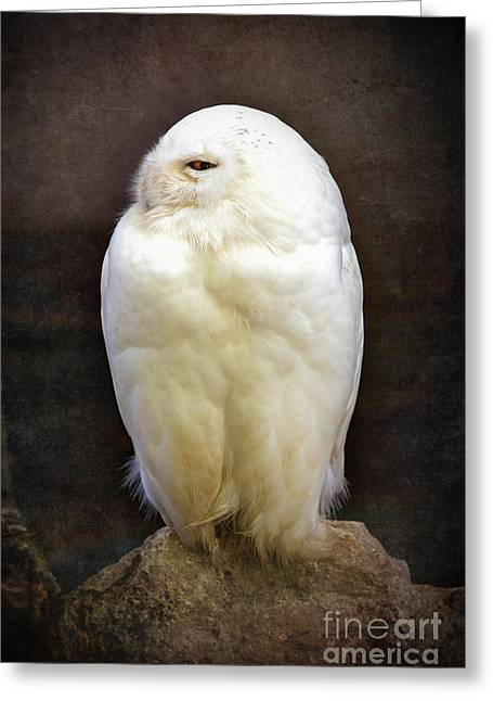 Cute Owl Greeting Cards - Snowy owl vintage  Greeting Card by Jane Rix