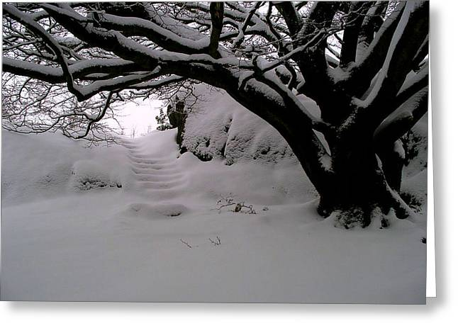 Snow Scenes Greeting Cards - Snowy Path Greeting Card by Amanda Moore