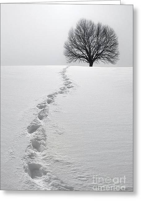 Footprint Greeting Cards - Snowy Path Greeting Card by Diane Diederich