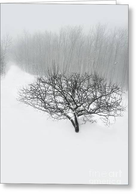 Gray Sky Greeting Cards - Snowy Path Greeting Card by HD Connelly