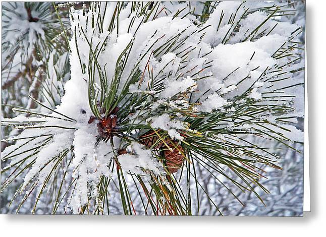 Snowy Pine Greeting Card by Aimee L Maher Photography and Art Visit ALMGallerydotcom
