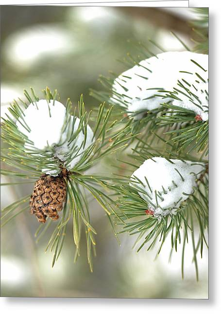 Pine Cones Greeting Cards - Snowy Pine Greeting Card by Brian Mollenkopf