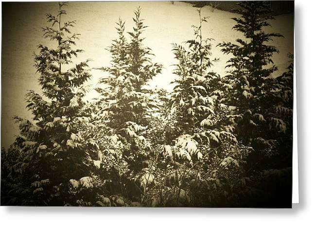 Snow Scenes Greeting Cards - Snowy Pines Greeting Card by Joyce Kimble Smith