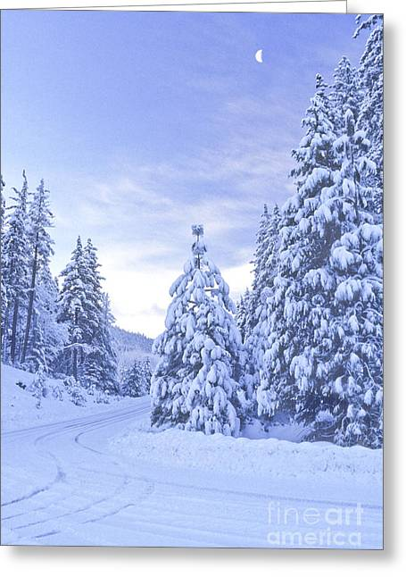Snowy Night Night Greeting Cards - Snowy Road CA Greeting Card by Richard and Ellen Thane