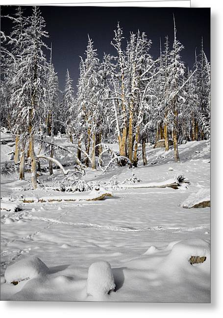 Snow Scenes Greeting Cards - Snowy Silence Greeting Card by Chris Brannen