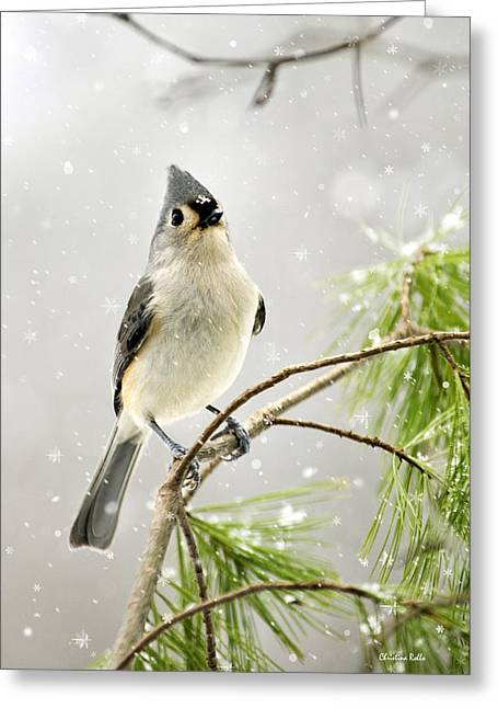 Snowy Songbird Greeting Card by Christina Rollo