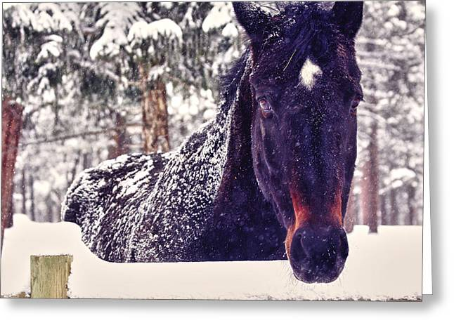 Brown Horse Photographs Greeting Cards - Snowy Spirit Greeting Card by Teri Virbickis