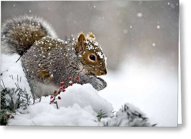 Sciurus Carolinensis Greeting Cards - Snowy Squirrel Greeting Card by Christina Rollo