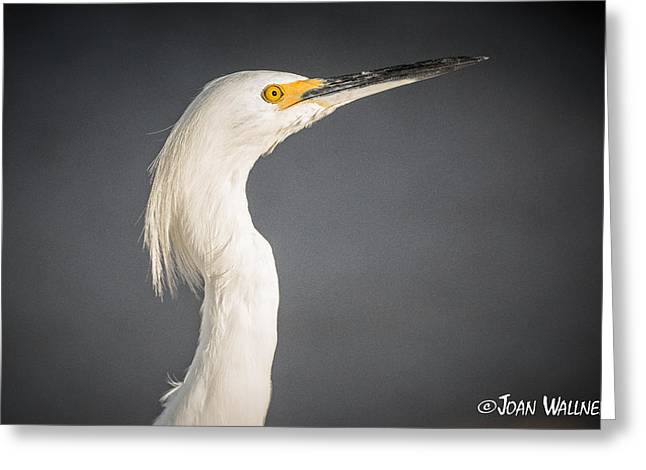 Englewood Greeting Cards - Snowy Stare Greeting Card by Joan Wallner