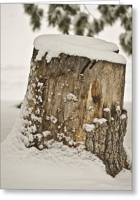 Winter Trees Mixed Media Greeting Cards - Snowy Stumptown Greeting Card by Trish Tritz