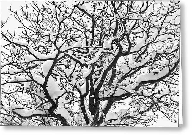 Snow Tree Prints Greeting Cards - Snowy Tree Black and White Greeting Card by James BO  Insogna