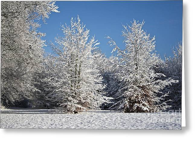 Snow On The Ground Greeting Cards - Snowy tree double Greeting Card by Sally Lloyd