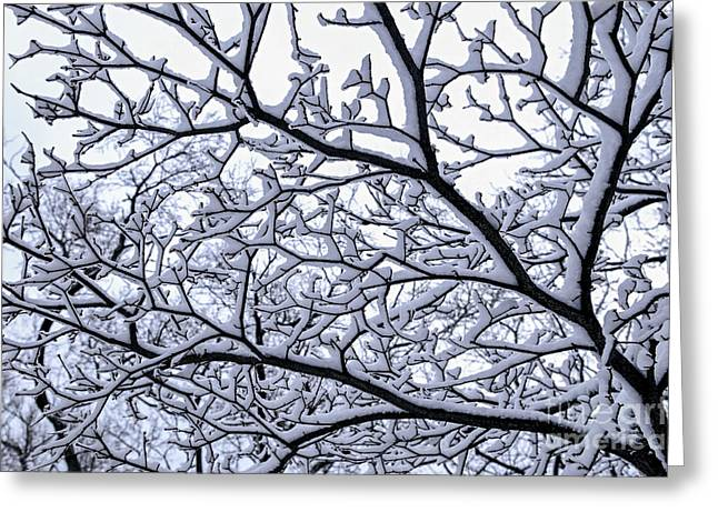 Winter Park Greeting Cards - Snowy tree Greeting Card by Elena Elisseeva