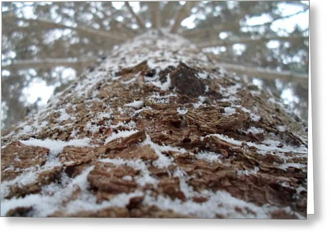 Jenna Mengersen Greeting Cards - Snowy Tree Greeting Card by Jenna Mengersen