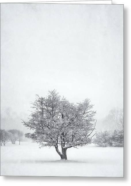Snowstorm Greeting Cards - Snowy Tree Greeting Card by Scott Norris