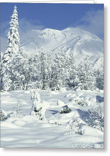 Californian Greeting Cards - Snowy Trees And Mt. Shasta, Ca Greeting Card by Richard and Ellen Thane