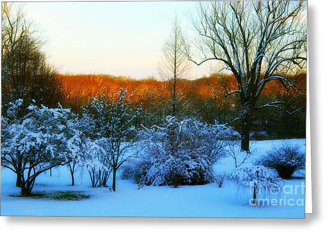 Snow-covered Landscape Greeting Cards - Snowy Trees in December Twilight - Pearl S. Buck Homestead Greeting Card by Anna Lisa Yoder