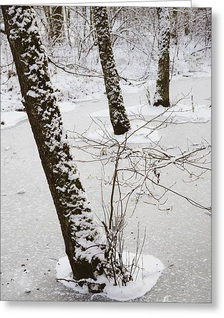 Snow-covered Landscape Greeting Cards - Snowy trees in frozen pond - winter forest Greeting Card by Matthias Hauser
