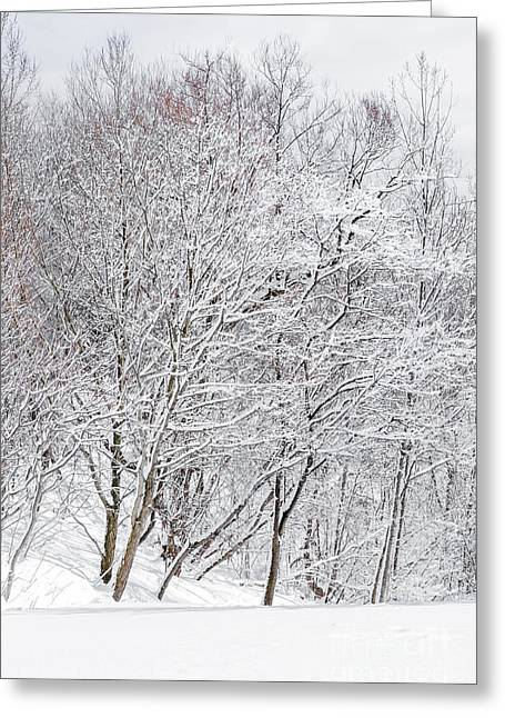 Winter Park Greeting Cards - Snowy trees in winter park Greeting Card by Elena Elisseeva