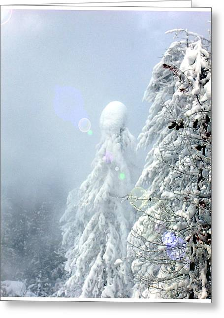 Snow On Trees Greeting Cards - Snowy trees Greeting Card by Kae Cheatham
