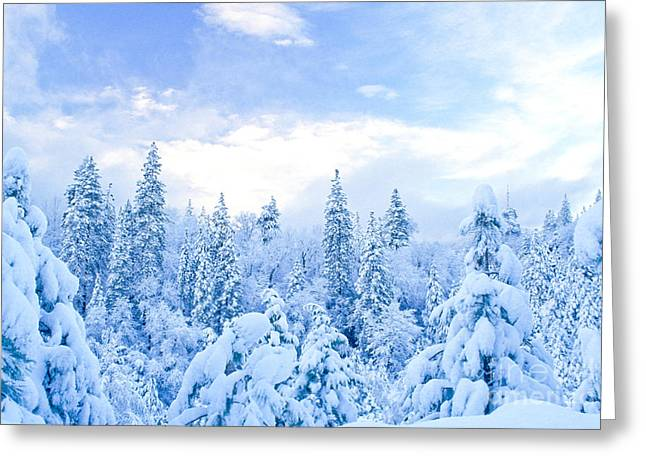 Snow-covered Landscape Greeting Cards - Snowy Trees Greeting Card by Richard and Ellen Thane