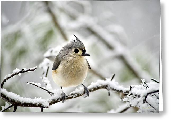 Snowy Tufted Titmouse Greeting Card by Christina Rollo