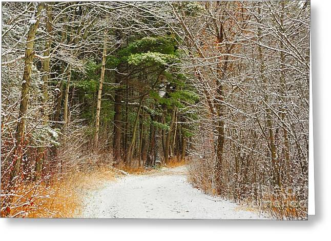 Snow-covered Landscape Greeting Cards - Snowy Tunnel of Trees Greeting Card by Terri Gostola