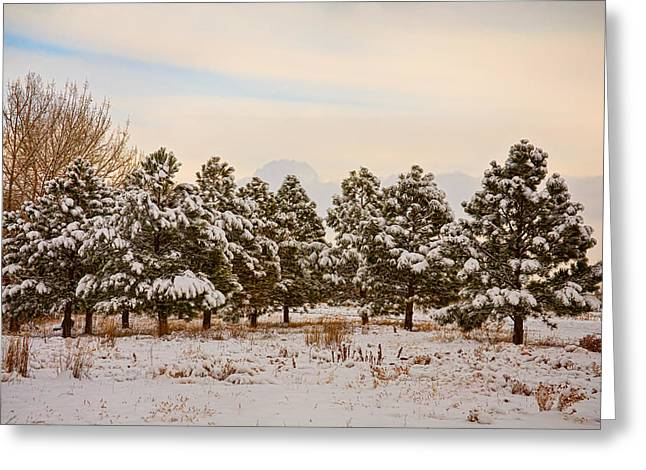 White Pine County Greeting Cards - Snowy Winter Pine Trees Greeting Card by James BO  Insogna