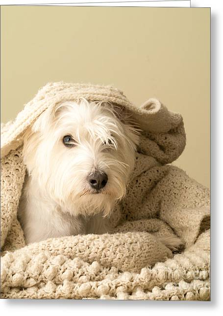 Blanket Photographs Greeting Cards - Snuggle Dog Greeting Card by Edward Fielding