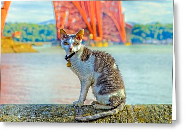Snuggles The Cat Greeting Card by Tylie Duff